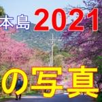 そうだ沖縄に行こう。冬の写真旅、20201年②。